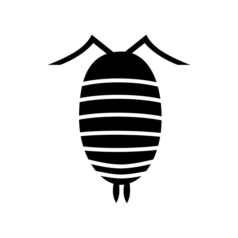 Bugs - Isopod