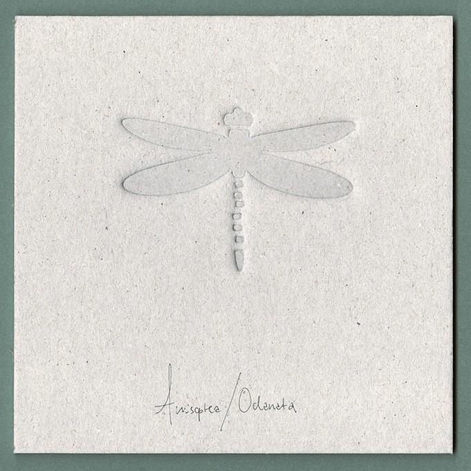 Bugs - Dragonfly (debossed)