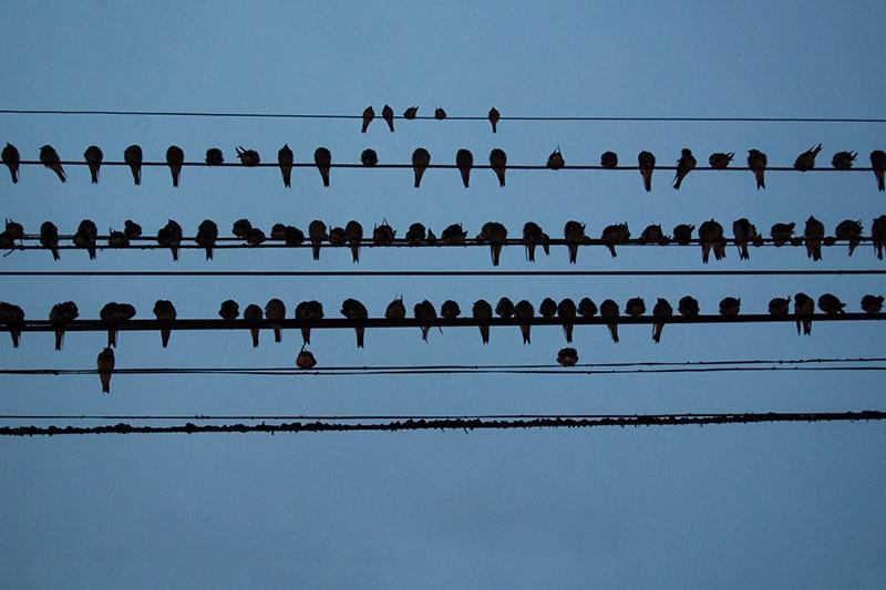 birds on a wire feeling blue