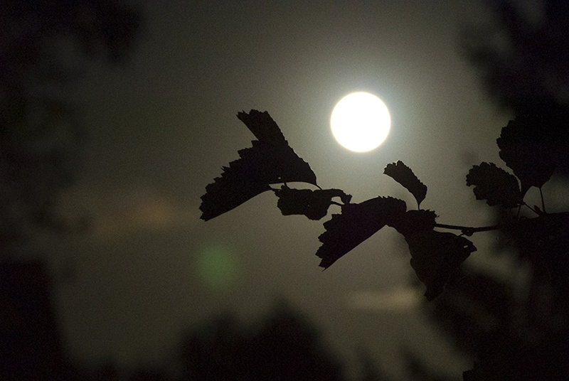 By the light of the sun and the moon - By the light of the full moon by VF PHoto
