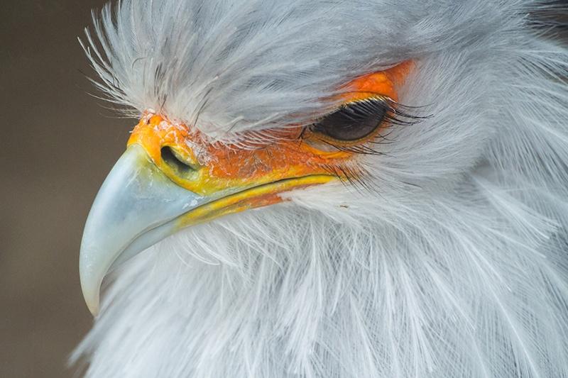 feathers and eyelashes