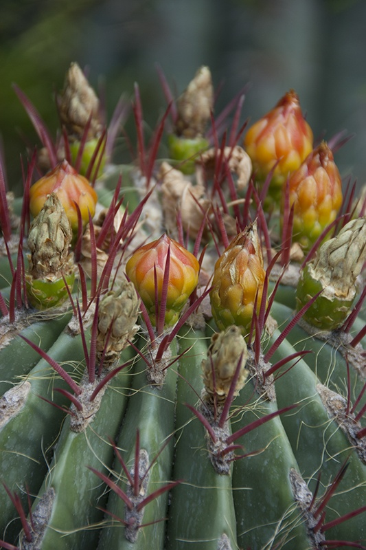 in the garden and beyond - Prickly beauty