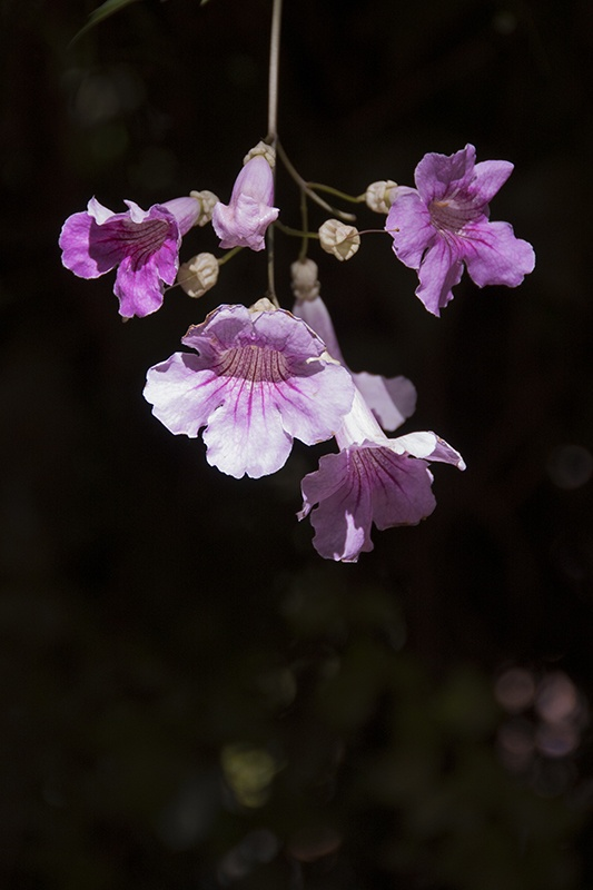 In the garden and beyond: delicate pink by VF PHoto