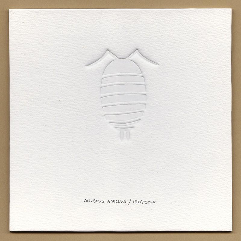 witte blinddruk pissebed ©VrijFormaat