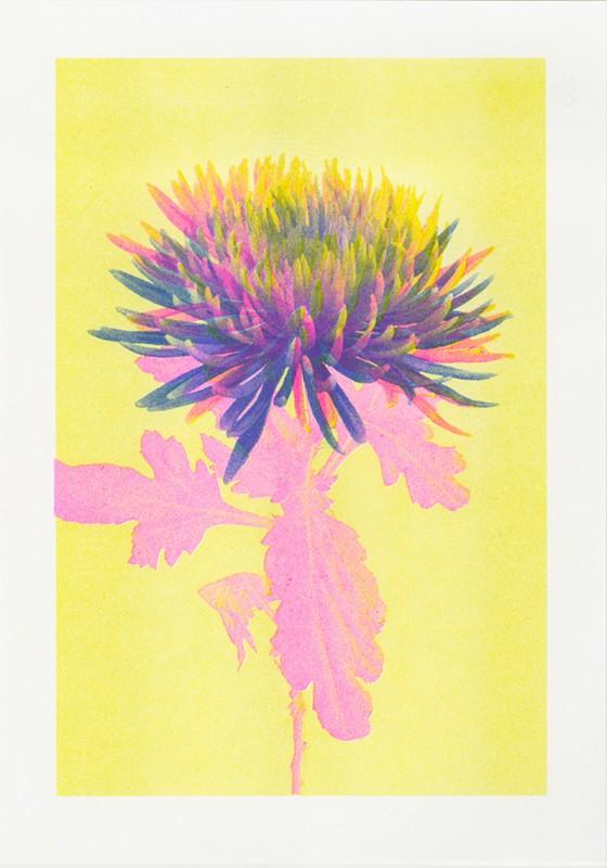 riso bloom 2 © VrijFormaat